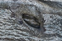 Close_up of tree bark