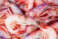 Prawns for sale at a market stall, Sorrento, Sorrentine Peninsula, Naples Province, Campania, Italy
