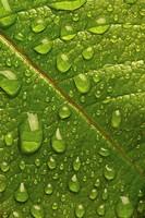 Dew drops on a leaf
