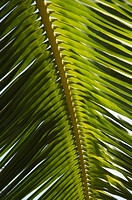 Palm leaf, Nicoya Pennisula, Costa Rica, Central America