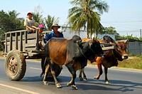 Ox cart, Phan Thiet, Viet Nam
