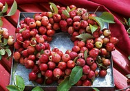 Wreath of crab_apples