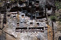 Effigies of the dead looking out from Lemo cliff tombs, Toraja area, island of Sulawesi, Indonesia, Southeast Asia, Asia
