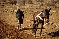 Berber ploughing field, Anti Atlas region, Morocco, North Africa, Africa