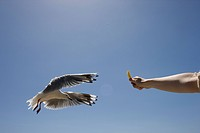 a seagul taking food out of a persons hand.