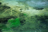 Close_up of water whirling over green rocks