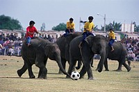 Elephants playing football, Elephant Round_up festival, Surin City, Thailand, Southeast Asia