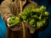 Man showing organic lettuce