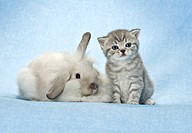 animal friendship : dwarf rabbit and kitten restrictions: Tierratgeber_Bücher, Kalender / animal guidebooks, calendars