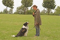 Border Collie dog with mistress