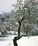 snow_covered tree
