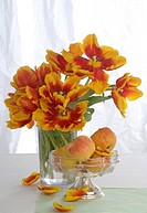 tulip bouquet and dish with apples