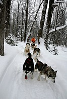 Dogsled in the area of Charlevoix Quebec