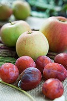 Apples and plums (thumbnail)