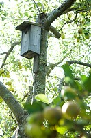 Birdhouse in apple tree