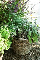 Wicker basket growing a variety of plants