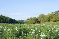 Meadow with wildflowers, house in background