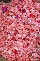 Rose petals, full frame