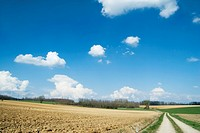 Rural landscape with dirt road (thumbnail)