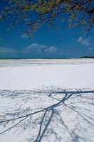The shadow of a pine tree on a white sand beach, Michamvi Beach, Zanzibar, Tanzania, East Africa, Africa