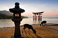 Tori gate, Itsukushima Shinto shrine, Miyajima island, Hiroshima province, Japan (October 2008)