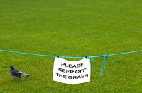 Keep off the grass sing with pigeon walking behind, Newly laid grass at Belfast City Hall