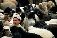 Uighur boy surrounded by sheep, Sunday Market, Kashi, Xinjiang, China, Asia
