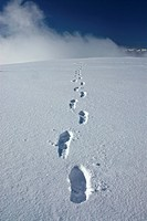 Hiker´s boot tracks in snow leading up Primrose Ridge during Winter in Denali National Park, Alaska