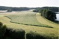Höskörd I Morgondimma, Landscape By Clear Sky