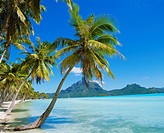 Palm trees and beach, Bora Bora, Tahiti, Society Islands, French Polynesia, Pacific