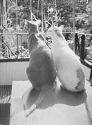 Två katter sitter på ett bord på balkong, närbild. Close_Up Of Domestic Cats Sitting On Table On Balcony, Rear View B&W