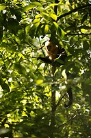 Costa Rica _ Guanacaste _ Rincon de la Vieja national park