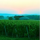 Tokaj, Den Ungerska Vinodlingsorten, Sunset By Vineyard, Elevated View