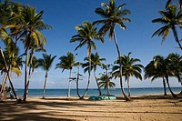 Palm trees on the beach, Las Terrenas, Samana Peninsula, Dominican Republic