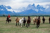 A group of gauchos riding horses, with the Cuernos del Paine Horns of Paine mountains behind, Torres del Paine National Park, Patagonia, Chile, South ...