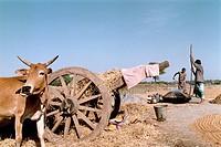Dig. Original FOTO: Johan Wingborg COPYRIGHT BILDHUSET, Man And Woman Working In Field