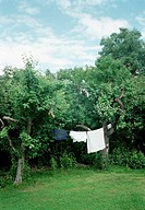 Tvättlina I Trädgård, Clothes Hanging On Wire Among Trees