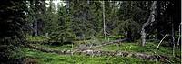 Kirjesålandet, Västerbotten, Trees In Forest