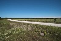 Landsväg På Ön Ösel I Estland, Road By Field