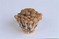 Cluster Of Mushrooms
