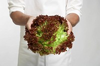 Chef holding red leaf lettuce (mid section)