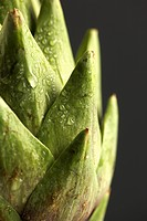 Droplets on artichoke extreme close-up (thumbnail)