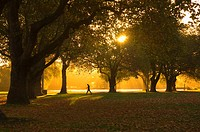 Man walking under trees, Hagley Park, Christchurch, Canterbury, South Island, New Zealand, Pacific