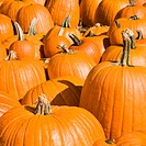 Autumn pumpkins at outdoor market