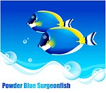 fishes, sea, underwater, undersea, ocean, Powder Blue Surgeonfish