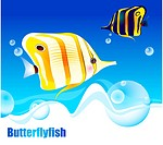 underwater, butterflyfishes, undersea, ocean, sea, Butterflyfish