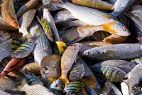 Mutrah fish market, Muscat, Oman, Middle East