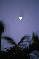 The Moon And A Coconut