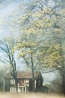House amid trees, blurred Ett gammalt ensamt hus mitt inne i skogen.