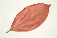 Autumn Leaves (thumbnail)